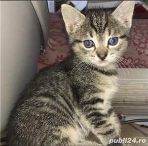 Donez pui de pisică - imagine 4