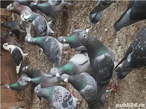 Porumbei straini - imagine 1