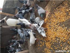 Porumbei straini - imagine 2