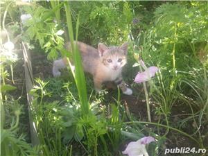 gratuit pisicute SACALAZ - imagine 4