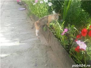 gratuit pisicute SACALAZ - imagine 3