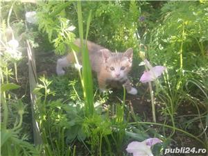gratuit pisicute SACALAZ - imagine 6
