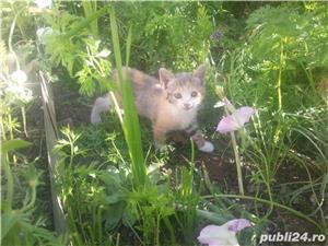 gratuit pisicute SACALAZ - imagine 5