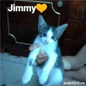 Dau pui de pisica  - imagine 1