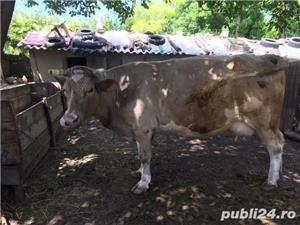 Vand vaca - imagine 1