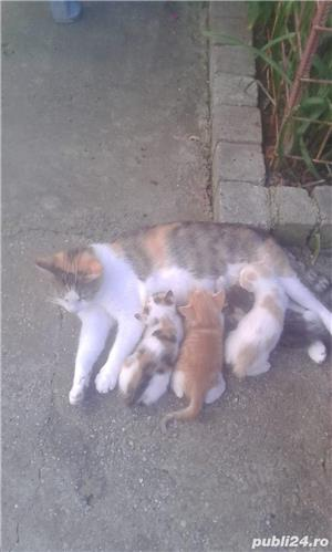 Motanei si pisicute de adoptat! Cuminti si afectuosi - imagine 1