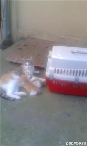Motanei si pisicute de adoptat! Cuminti si afectuosi - imagine 2