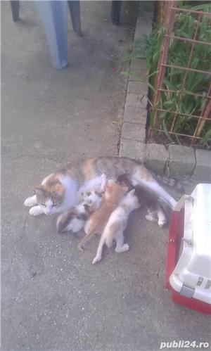 Motanei si pisicute de adoptat! Cuminti si afectuosi - imagine 3