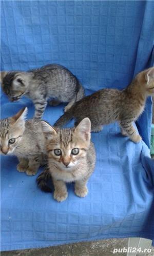 Donez pisici - imagine 3