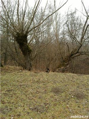 Teren vedere splendida,o gura de rai 2173 mp. intravilan Breaza,Prahova - imagine 7