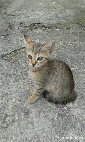 Donez pisici - imagine 6