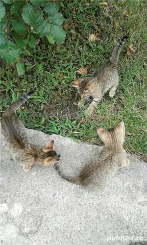 Donez pisici - imagine 4