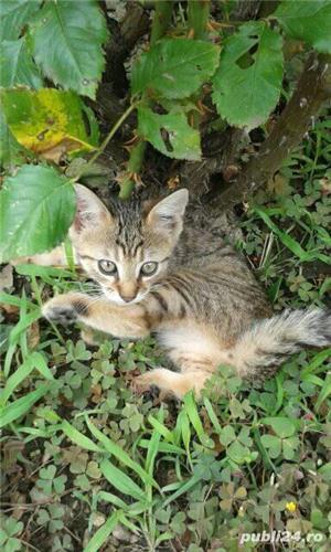 Donez pisici - imagine 5