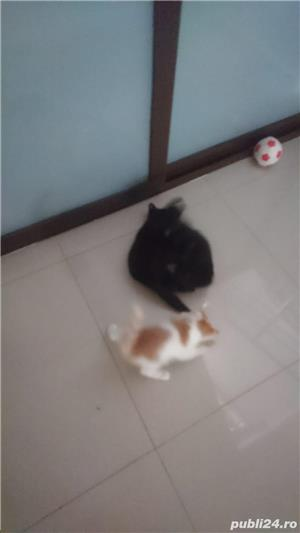 Fac cadou puiuți de pisică - imagine 12