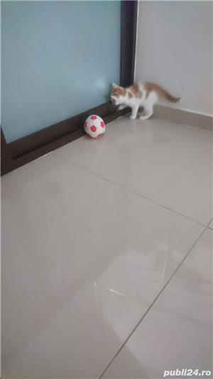 Fac cadou puiuți de pisică - imagine 6