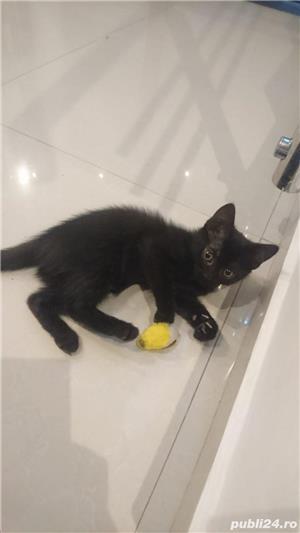 Fac cadou puiuți de pisică - imagine 17
