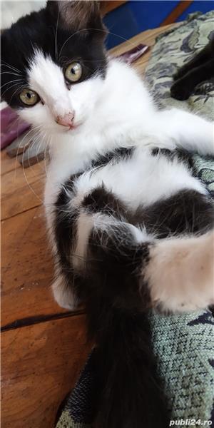 Donez puii de pisică - imagine 5