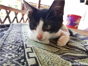 Donez puii de pisică - imagine 4
