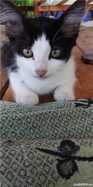 Donez puii de pisică - imagine 6