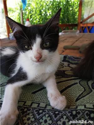 Donez puii de pisică - imagine 1