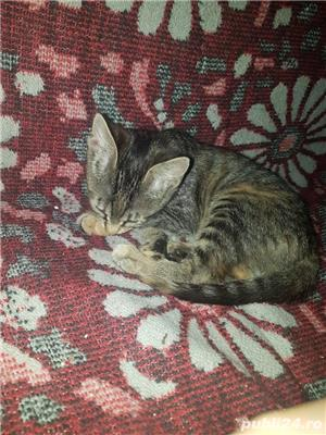 Dau spre adoptie pui de pisicuta - imagine 5