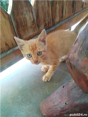 Pisică de vânzare  - imagine 1
