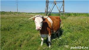 Vand vaca baltata - imagine 1