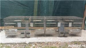 Boxe, custi pasari, iepuri - imagine 2