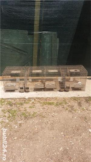 Boxe, custi pasari, iepuri - imagine 4