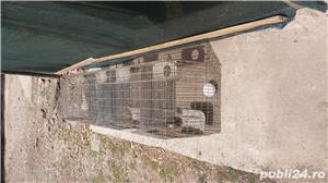Boxe, custi pasari, iepuri - imagine 1