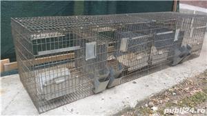 Boxe, custi pasari, iepuri - imagine 3