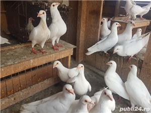 Porumbei albi  - imagine 5