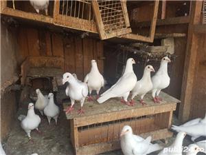 Porumbei albi  - imagine 3