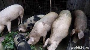 Grasuni si porci grasi de carne - imagine 2