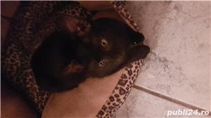 Pisicuta pt adoptie - imagine 3