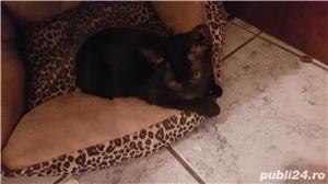 Pisicuta pt adoptie - imagine 1