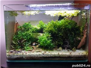 Vand nano acvariu plantat cu creveti tiger cu ochi portocalii - imagine 3