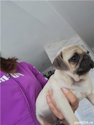 Mops pug/bej - imagine 5