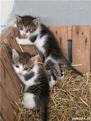 Pisici - imagine 3