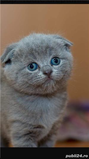 Tuns de pisicute la domiciliu - imagine 3