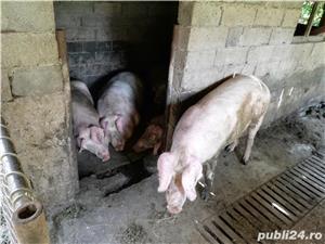 Porci de vânzare!  - imagine 3