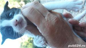 Pisici - imagine 2