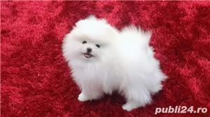 Pomeranian alb boo toy poze reale - imagine 3