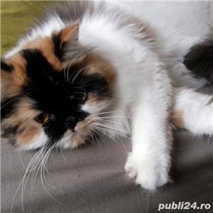 Hello.kitty - imagine 1