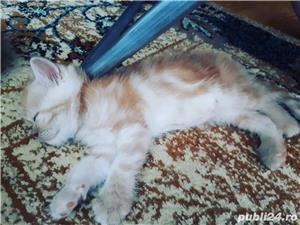 Hello kitty - imagine 4