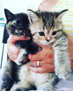 Hello kitty - imagine 6