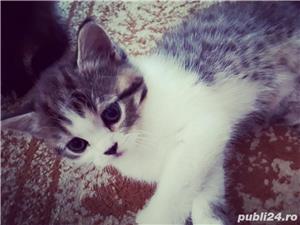 Hello kitty - imagine 7