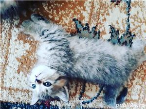 Hello kitty - imagine 5