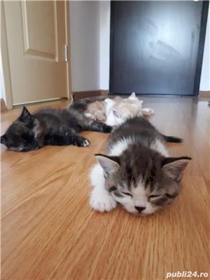 Hello.kitty - imagine 12
