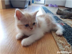 Hello.kitty - imagine 13